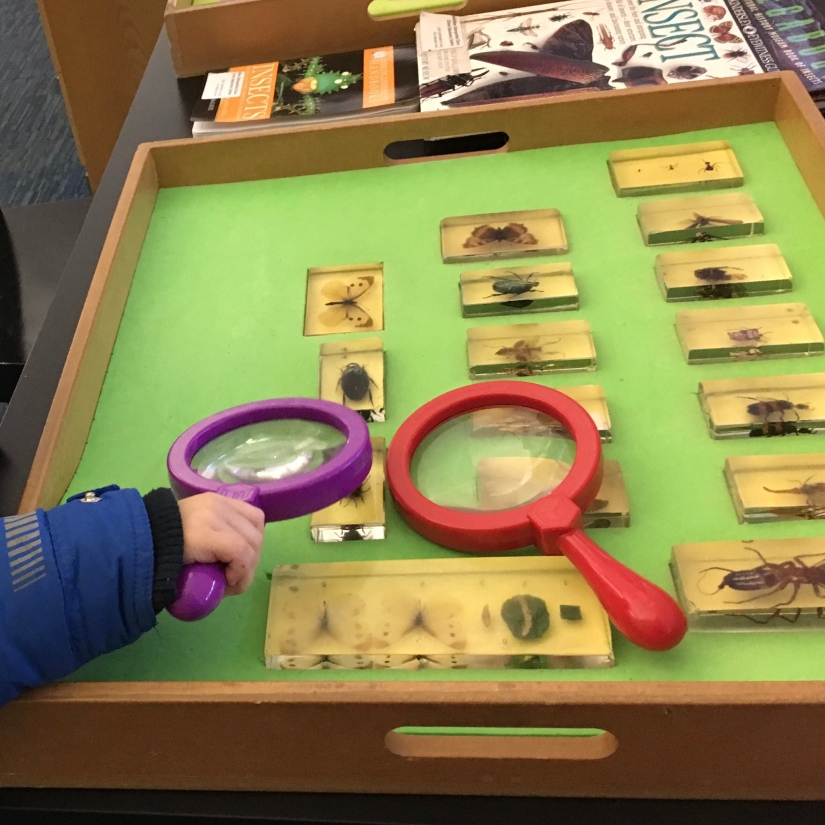 a toddler handles a large magnifying glass to look at some insect specimins in a museum tray